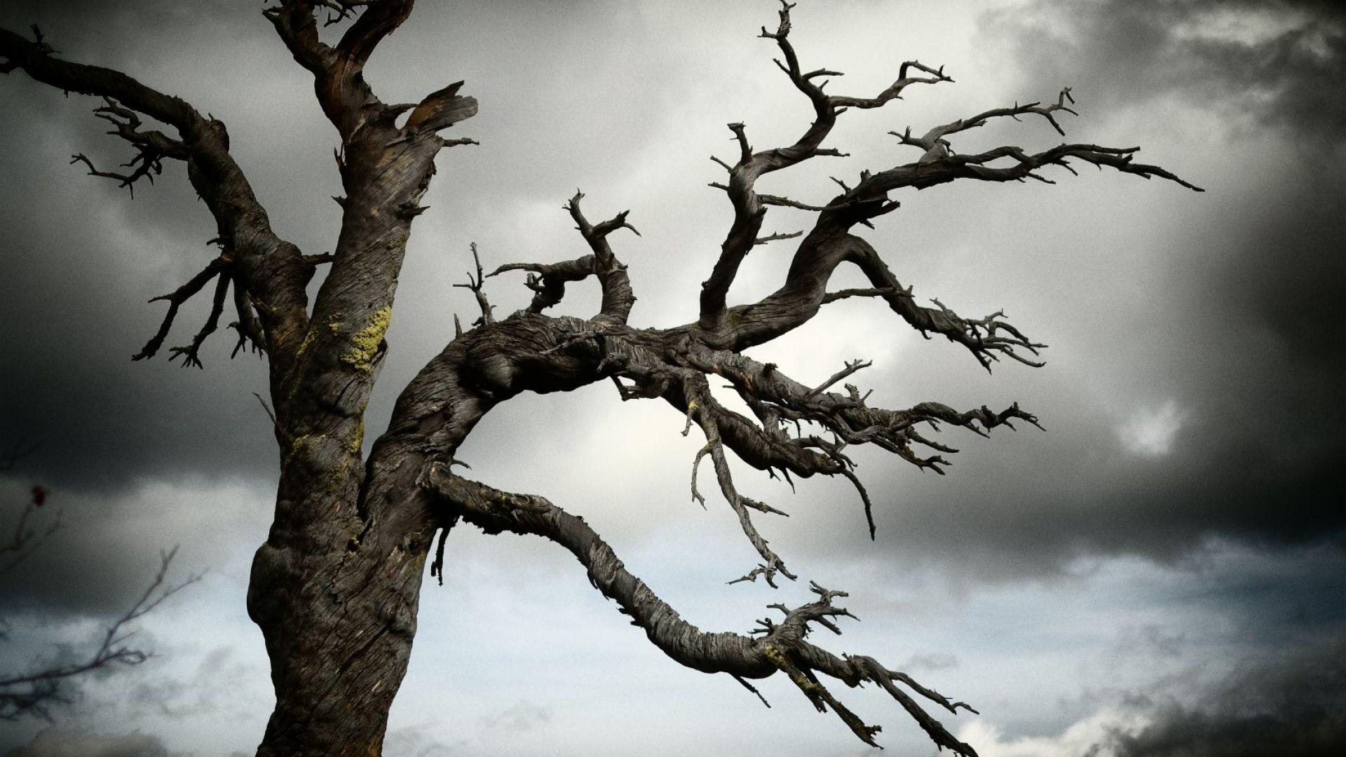 В градовете на САЩ загиват десетки милиони дървета