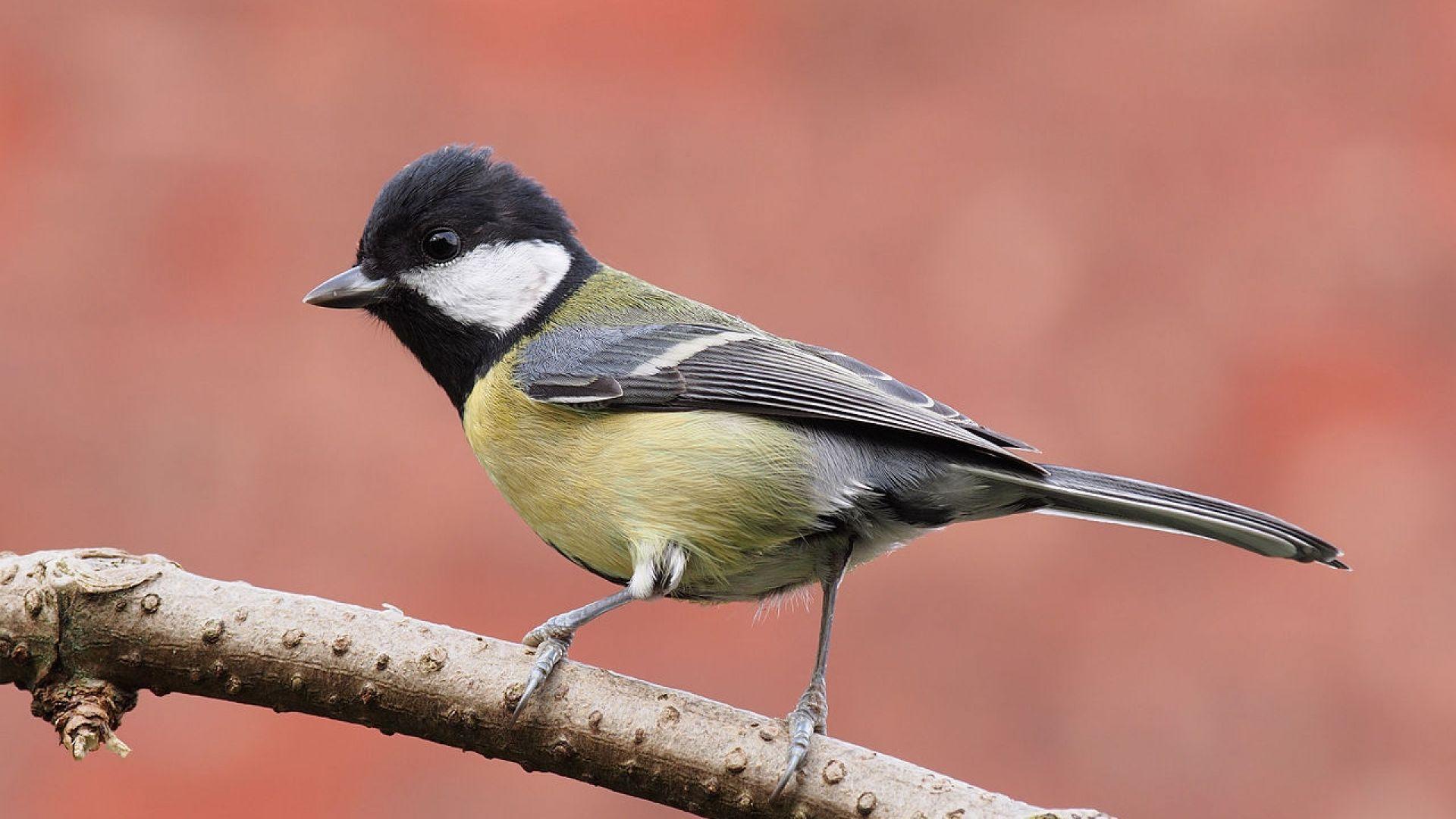 """Учени тренират птичета да гледат """"телевизия"""""""