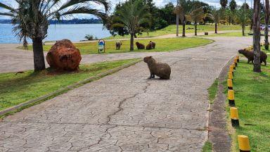 Плъхове с размери на човек са обитавали някога Земята (галерия)