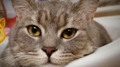 Коя е първата котка инфлуенсър в Instagram в България...
