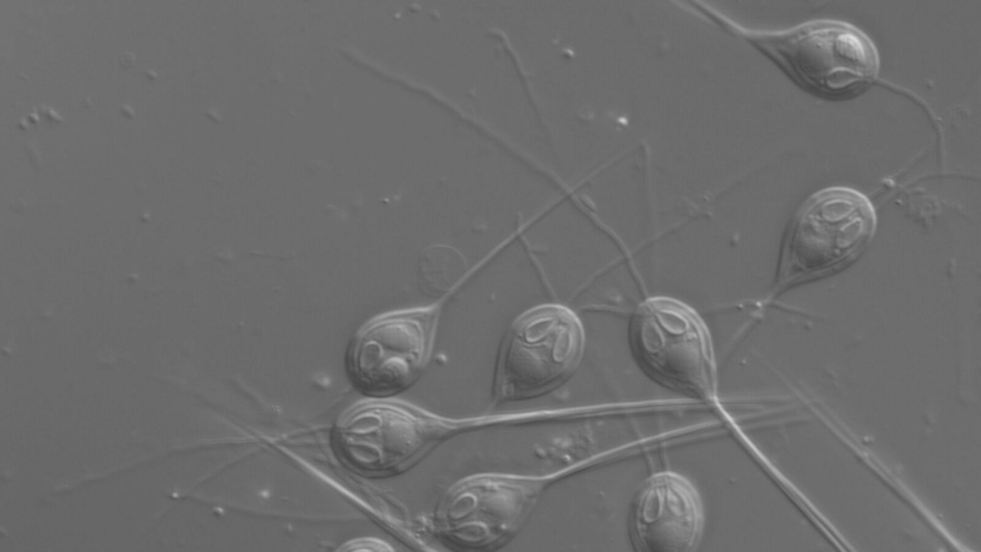 """Откриха организъм, който се е """"отучил"""" да диша"""