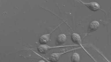 """Откриха организъм,  които са е """"отучил"""" да диша"""