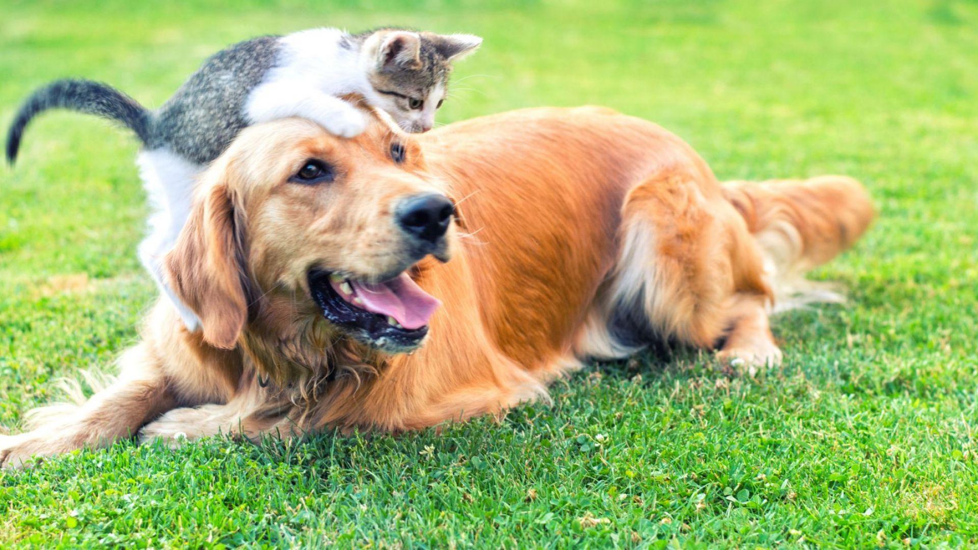 Котките и кучетата помнят събития, които са се случили преди години