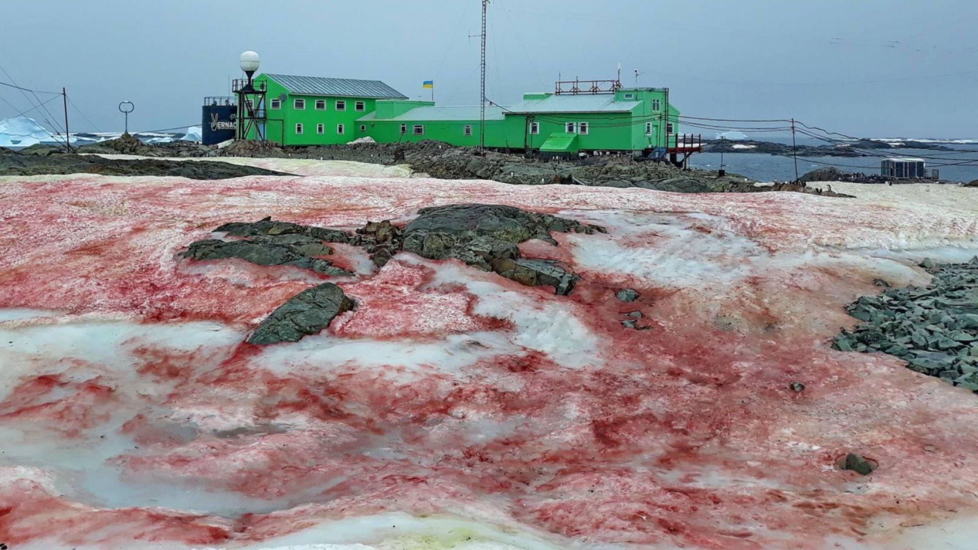 Снегът в Антарктида стана кървавочервен (снимки)