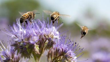 Мобилните телефони може да имат роля за смъртта на насекомите
