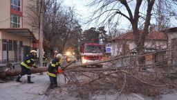 Силен вятър чупи клони и поваля дървета (снимки)