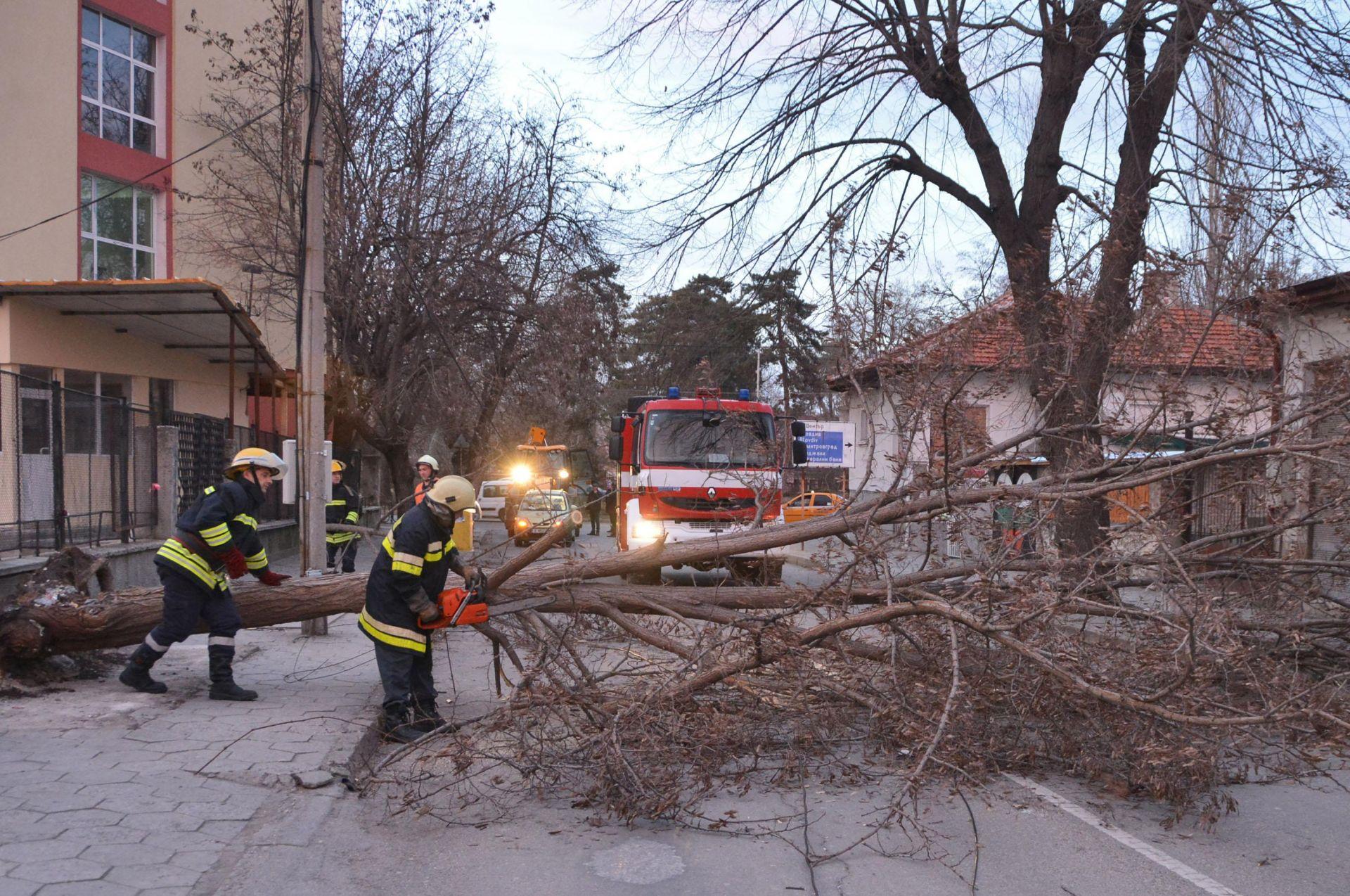 Силен вятър събори дърво в Хасково