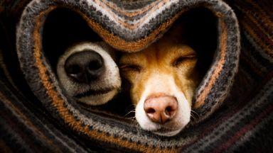 Защо носовете на кучетата са винаги студени