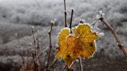 Сняг и до минус 2 градуса през ноември