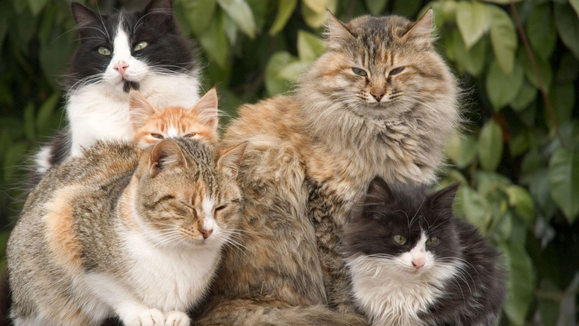 Защо котешката трева подлудява котките