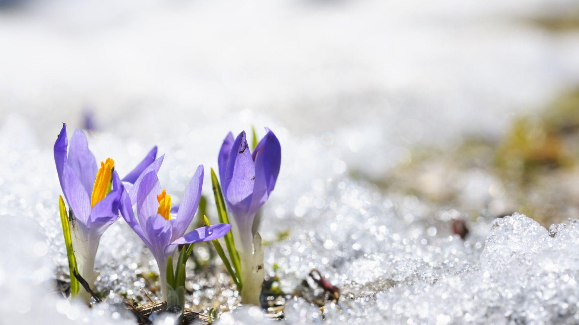 Бавно затопляне от утре, пролетни температури идната седмица