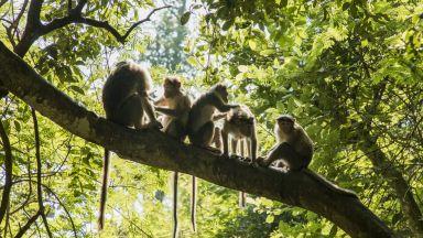 Джунглите скоро ще произвеждат по-голямо количество диоксид, отколкото поглъщат