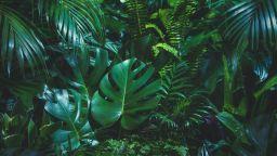 Плантациите - с повече вредни емисии от дивите тропически гори