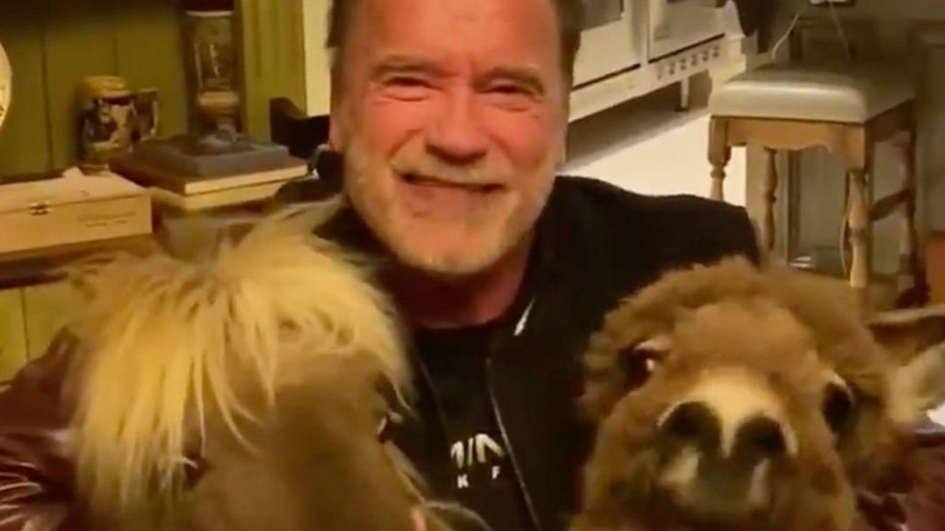 """Арнолд Шварценегер и домашните му животни с видеопризив """"Стойте си вкъщи"""""""
