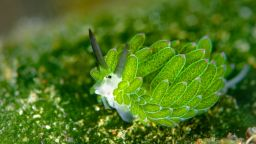 Вижте възхитителни морски охлюви, които приличат на анимационни герои