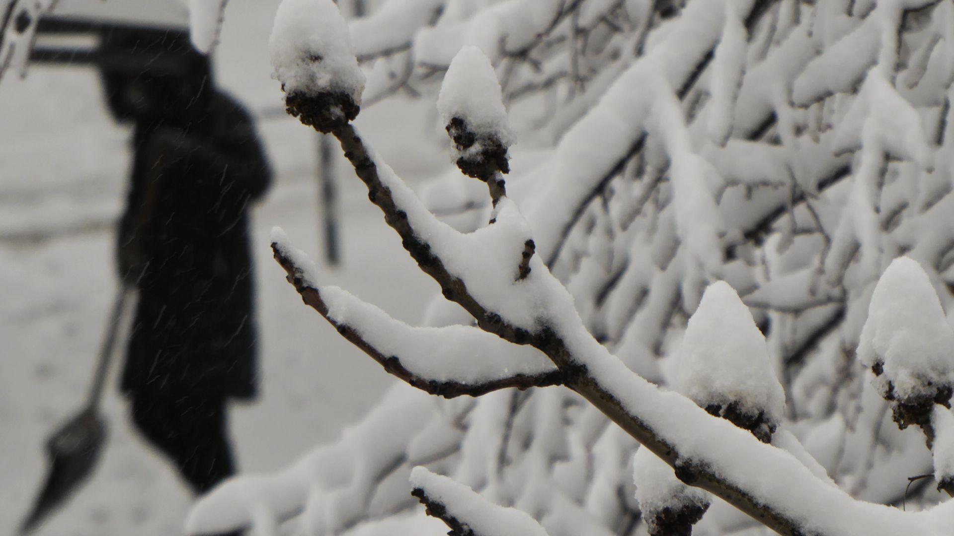 Закъснялата зима донесе сняг в София, а през деня валежите