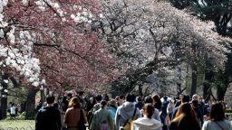 Въпреки коронавируса японците празнуват ханами, радостта от настъпващата пролет