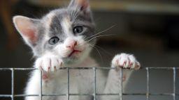 Домашна котка се зарази с новия коронавирус от стопанина си в Белгия