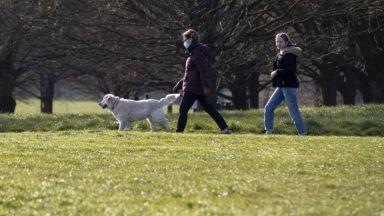 Полицейски началник: Кучета се разхождат около блока, а не из целия град