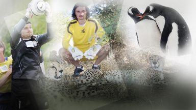 Защо не бива да отвличаш пингвин? Пътеводител на най-великия футболен стопаджия