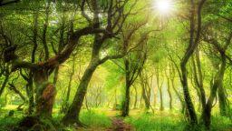 Древната гора Фанал  - истинско съкровище на природата с 500-годишни дървета