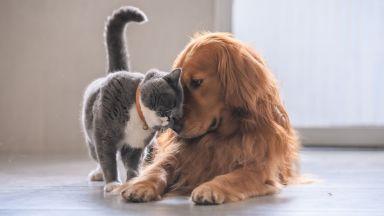 Котките могат да бъдат инфектирани с новия коронавирус, кучетата - по-трудно