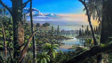 В миналото Антарктида е била топла тропическа джунгла