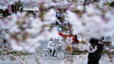 Цъфнали вишни и празни магазини в Япония (снимки)