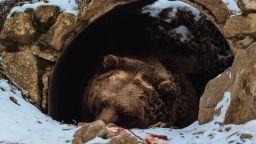 Защо европейските пещерни мечки са изчезнали