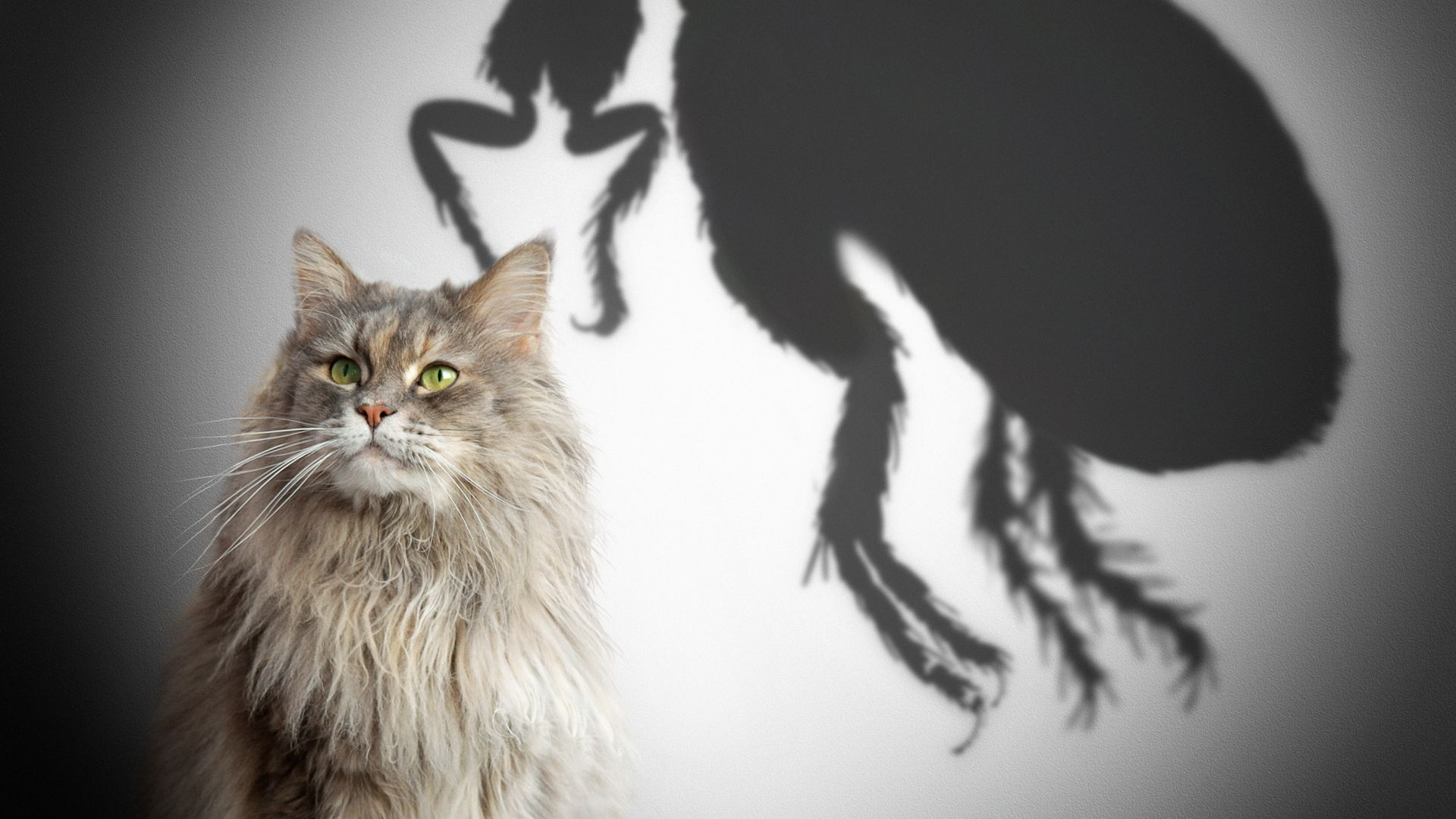 Бълхи, кърлежи и глисти - не искате това за вашата любима котка? Има решение