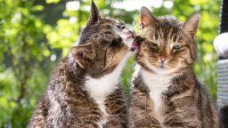 Ветеринари препоръчаха котките да не излизат от дома заради COVID-19