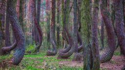 400 дървета, обвити в мистерия, правят рязък завой по пътя си към небето