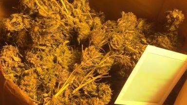 Столични полицаи разкриха домашна оранжерия за марихуана (снимки)
