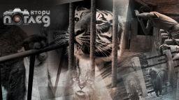 Голямото местене: Софийският зоопарк