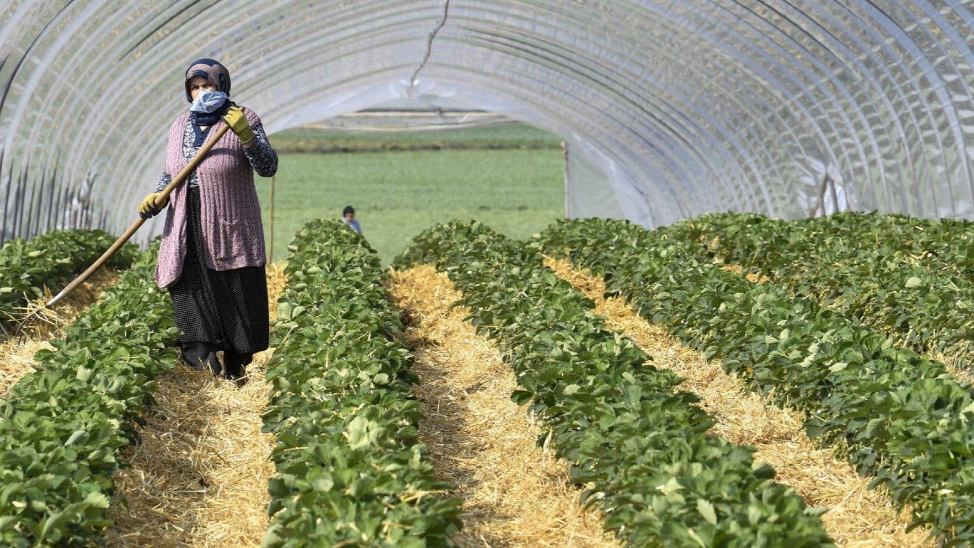 Нуждата от сезонни работници разчупва строгите правила в Европа