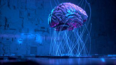 Как изглежда мозъкът, когато взема решение (видео)