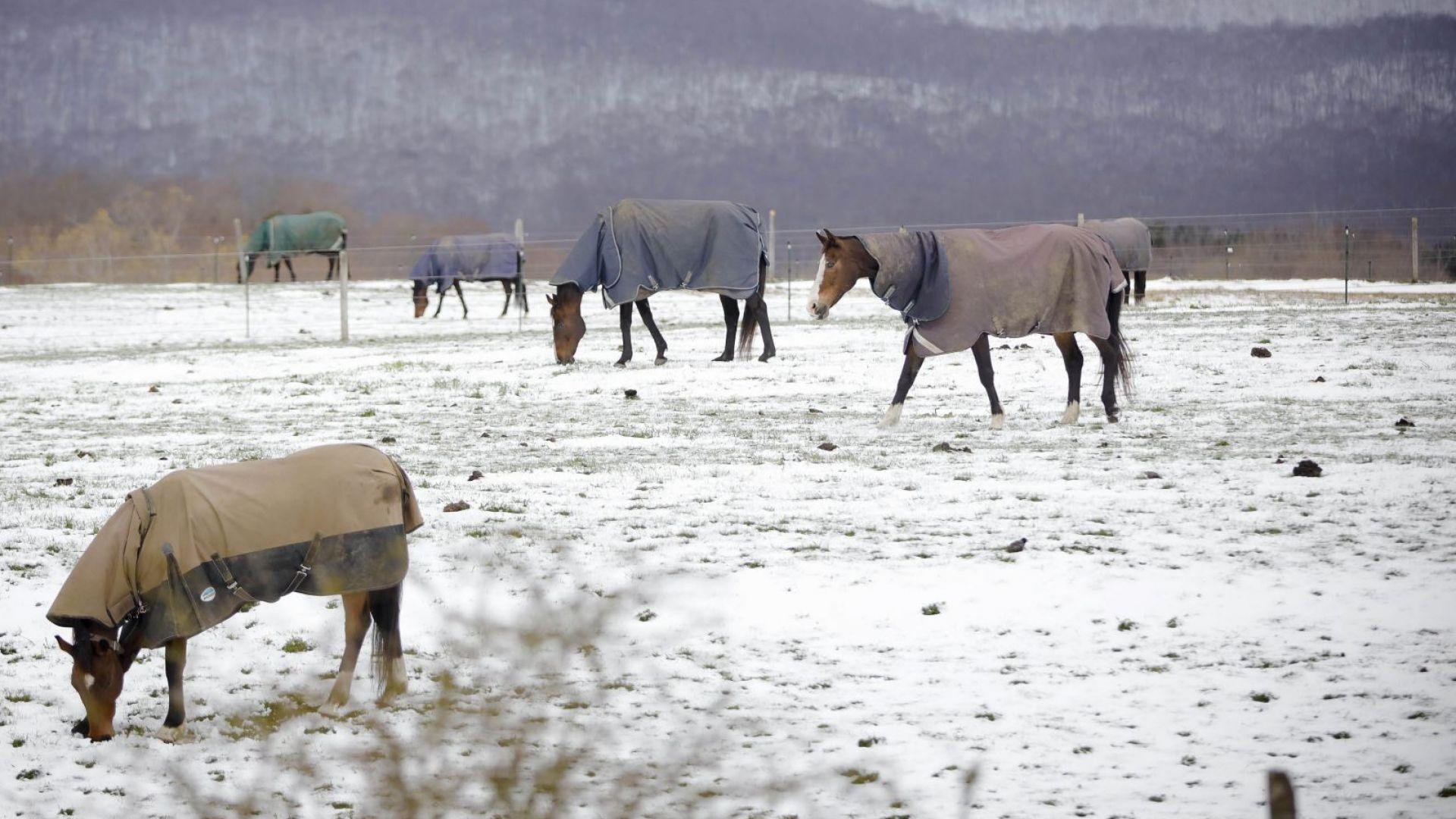 Полярен фронт донесе необичаен за сезона сняг в североизточната част