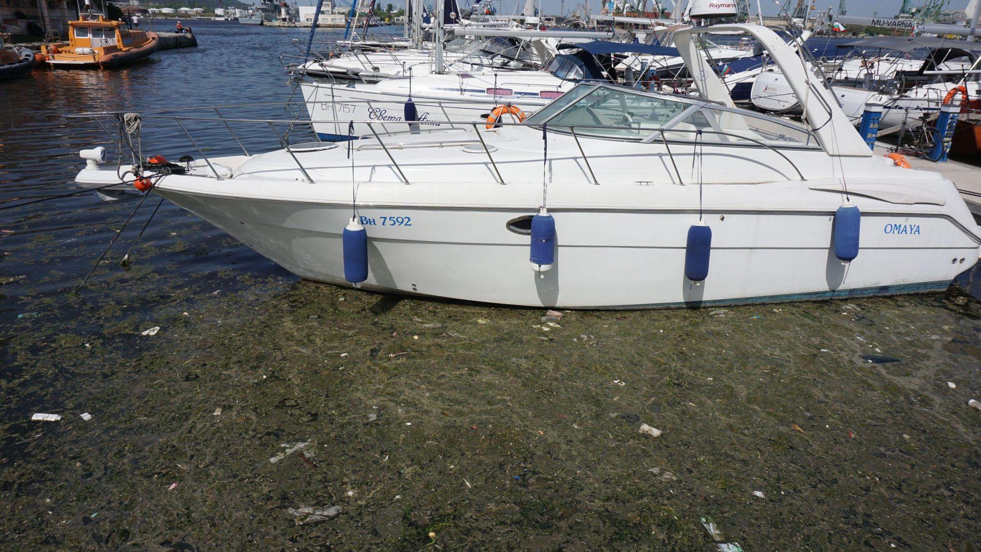 Луксозни яхти плуват във фекални води на Морска гара Варна (снимки)