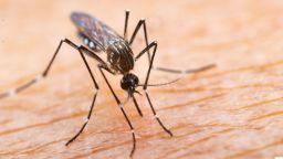 Затоплянето в Европа привлича опасни насекоми