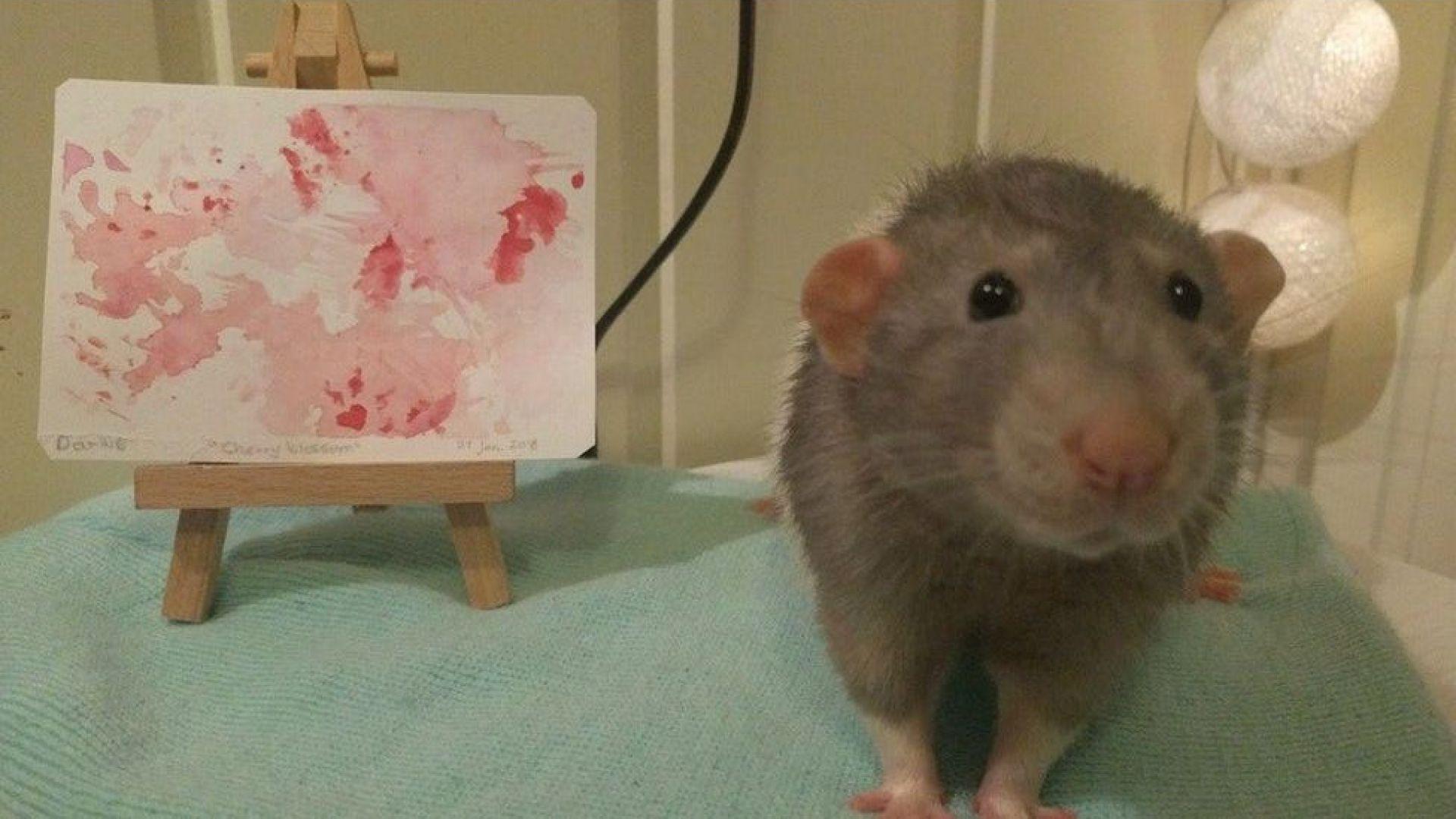 Ратис - талантливият домашен плъх, който се изявява като художник импресионист