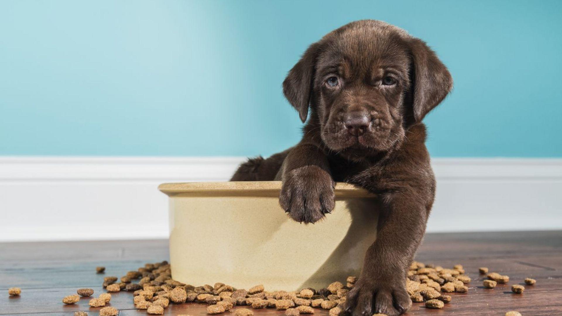 Всичко, което трябва да знаете за храненето на малкото кученце