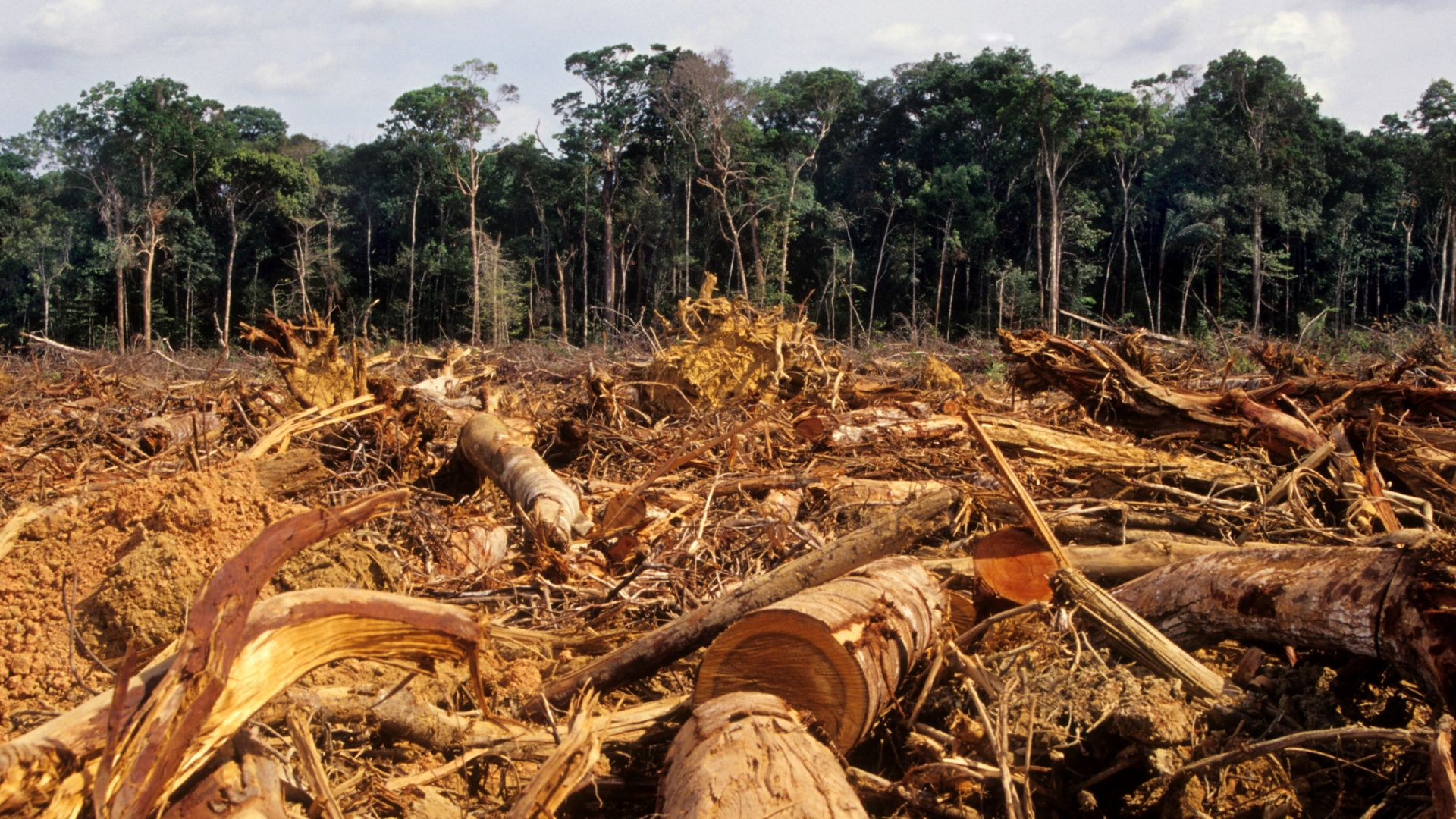 Обезлесяването се е увеличило в световен мащаб заради пандемията