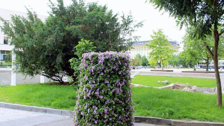 В пловдивските паркове и градини през май ще бъдат засадени