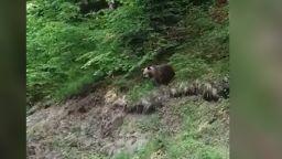 Уникални кадри: Заснеха мечка с две мечета под Рилския манастир (видео)
