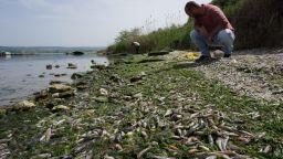 Измирането на рибата във Варненското езеро не е свързано с тръбопровода
