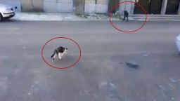 Кучетата не са това, което бяха: Софийска котка стана интернет герой (видео)