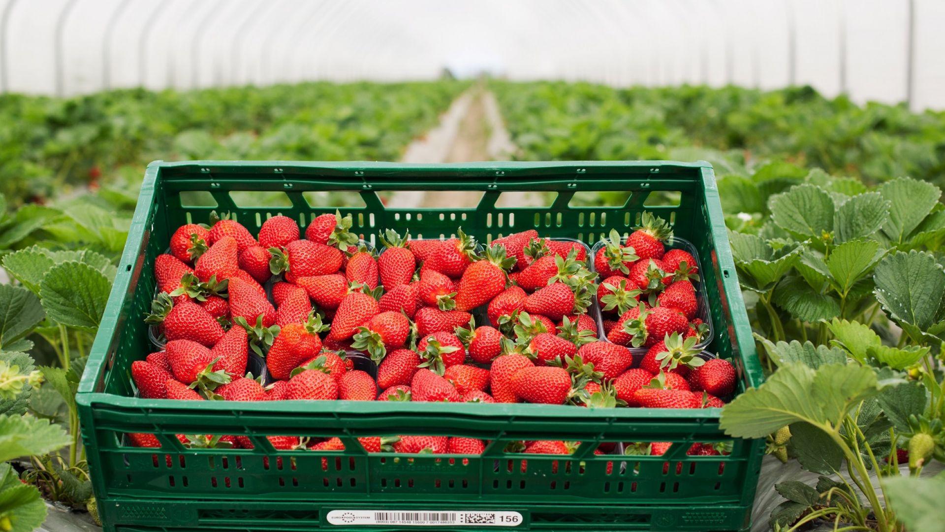 Kaufland предлага български плодове и зеленчуци от 16 региона у нас