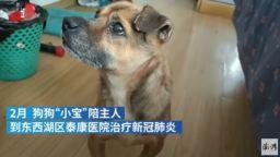 Куче чака три месеца в болница починалия си стопанин