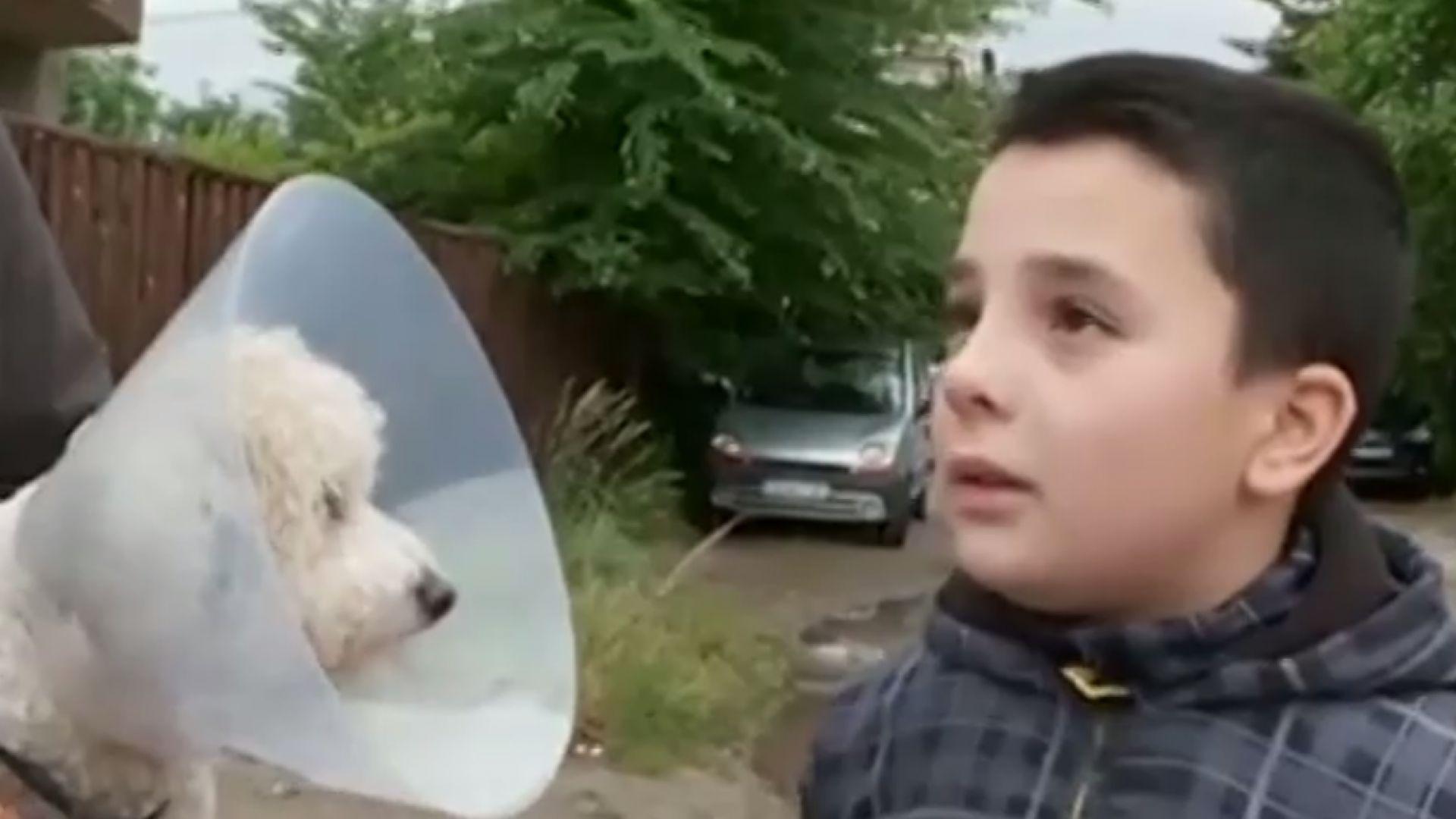 10-годишно момче е било нахапано от немска овчарка в София.