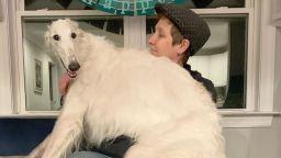 Куче с 31-сантиметров нос стана интернет звезда
